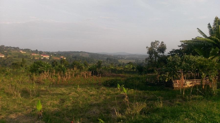 View at Namilyango